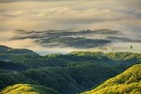 岡山県 雲海と新緑の蒜山高原の朝