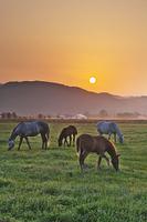 北海道 日の出と馬