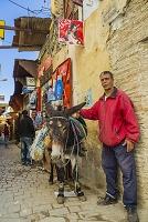 モロッコ フェズ メディナ(旧市街) ロバ