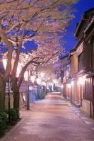 石川県 主計町と桜のライトアップ