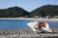熊本県 天草の風景 貝殻とビーチ