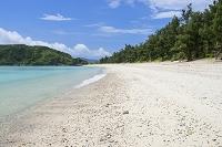 沖縄県 トウマの浜とモクマオウ林 座間味島