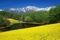 長野県 菜の花の中山高原