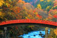 栃木県 日光二荒山神社 秋の神橋