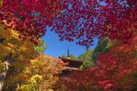 滋賀県 秋の金剛輪寺