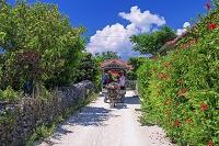 沖縄県 ハイビスカスと水牛車と民家集落 竹富島