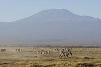 ケニア アンボセリ国立公園 グラントシマウマとキリマンジャロ