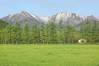 北海道 若草の牧場と残雪の日高連山