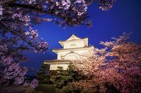 香川県 桜咲く丸亀城