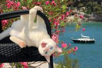 ガーデンチェアにぶら下がる猫