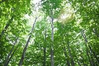 新緑のブナの林