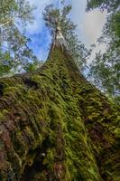 オーストラリア タスマニア
