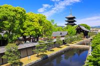 京都府 新緑の東寺の五重の塔と外堀