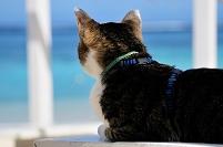 沖縄県 海辺の猫 新城海岸