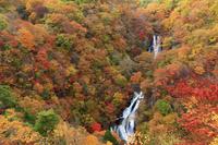 栃木県 霧降の滝 紅葉