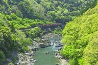 京都府 新緑の嵯峨野トロッコ列車と保津峡下り