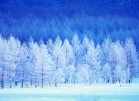 栃木県 日本の四季 冬