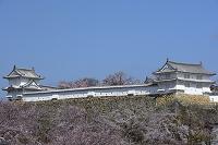 姫路 姫路城 桜とルの槽(長局百間廊下)ヌの槽
