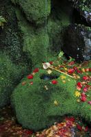 京都府 護法堂弁天のつくばいと散り紅葉