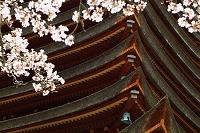 奈良県 談山神社 十三重塔