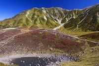 富山県 火山ガスで枯れたハイマツとリンドウ池と別山