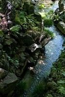 東京都 小石川後楽園 大堰川