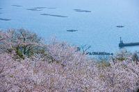 広島県 東広島市 カキ筏
