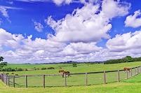 北海道 競走馬と放牧地