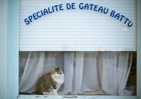 フランス ケーキ屋の窓辺で佇む猫