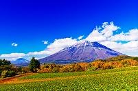 北海道 新雪の羊蹄山とビート畑