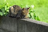 福島県 会津若松市 野良猫