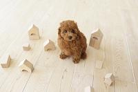リビングに座る子犬と積み木