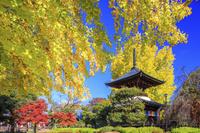 栃木県 鑁阿寺の多宝塔と大イチョウ