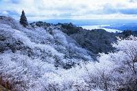 滋賀県 樹氷と琵琶湖