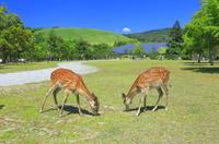奈良県 奈良公園