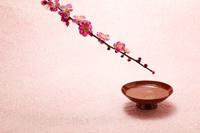 梅と杯 春の花