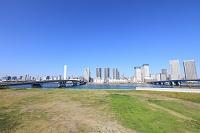 東京都 豊洲から見た高層ビル群