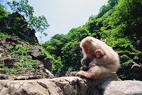 長野県 地獄谷野猿公苑 ニホンザルの親子