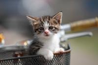 自転車に乗る子猫