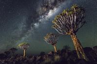 ナミビア ケートマンスフープ キヴァーツリーと星空