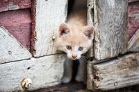 ドアの隙間から顔を出す子猫