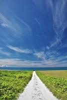 北海道 宗谷丘陵と白い道(ホタテの貝殻を敷き詰めた道)