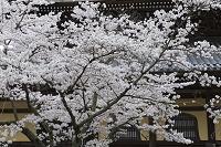 京都府 京都市 法堂 南禅寺