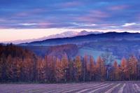 北海道 夕張山地とカラマツ林の朝