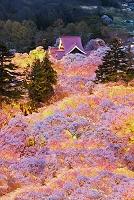 長野県 高遠城址公園の夜桜と高遠閣