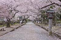 新潟県 弥彦村 弥彦公園