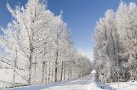 北海道 美瑛町 樹氷の丘
