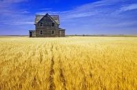 カナダ サスカチュワン州 農家