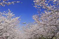 千葉県 飛行機