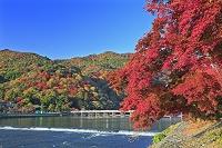 京都府 紅葉の嵐山と渡月橋と桂川